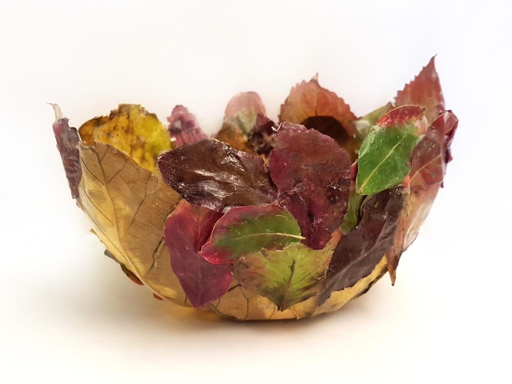 cuenco de hojas