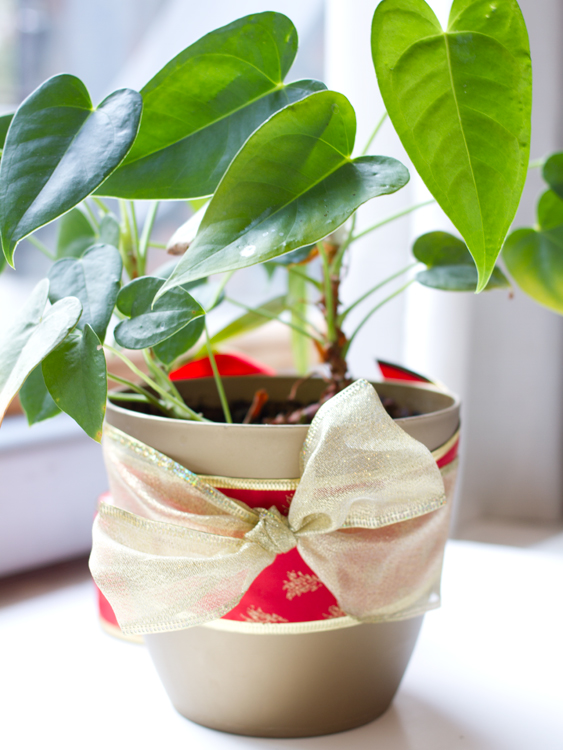 planta regalo