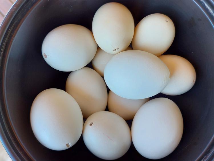 huevos blancos vaciados